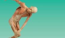 """Universal Exhibition Group prezintă expoziția """"OUR BODY: Universul Interior"""" în premieră la Constanța"""